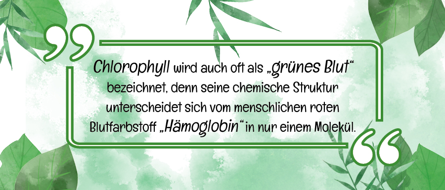Chlorophyll_Infografik