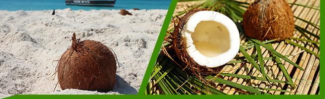 Coconut Secret - Kokosnuss